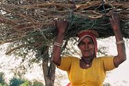 Dấu Chân Online 43: Cát bụi Rajasthan (Phần 1)