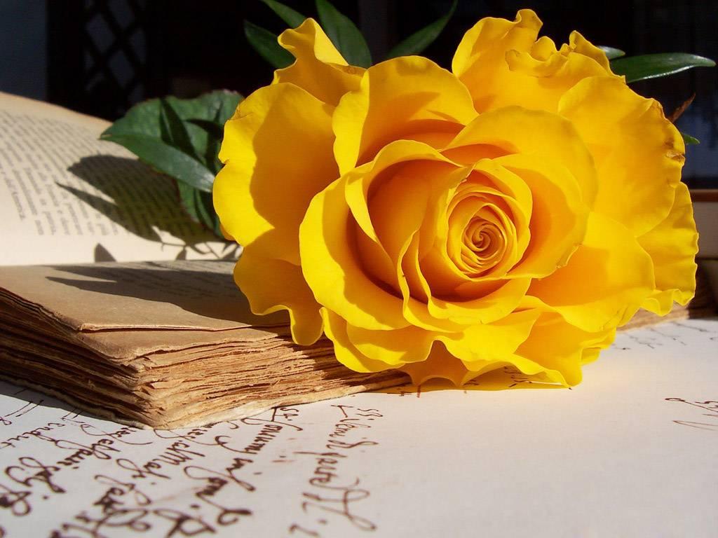 Sự tích hoa hồng