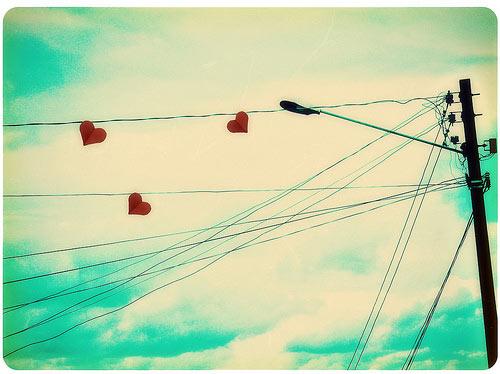 Hình như anh thích em...(Cỏ, hoa và tình yêu, Phần 15)
