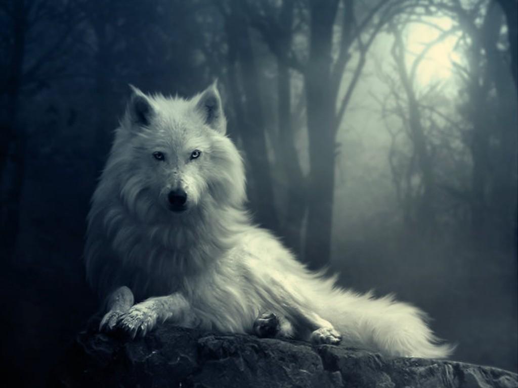 Hồn sói (Phần 1)