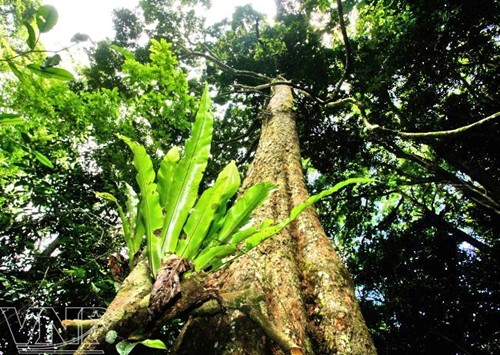 Dấu chân online 73: Mưa rừng Pù Luông