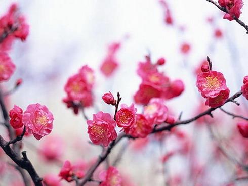 Con đường mùa xuân ( CXAN 137 )