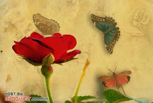 Khi cánh hồng còn rực thắm ( Thì thầm 238 )