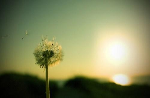 Hẹn ước với gió
