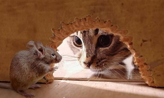 Tình bạn giữa Mèo và Chuột
