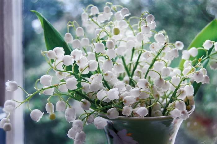 Bó hoa lãng mạn cho 12 cung hoàng đạo