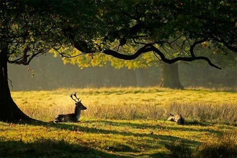 Trả lại bình yên và mùa thu cho đá