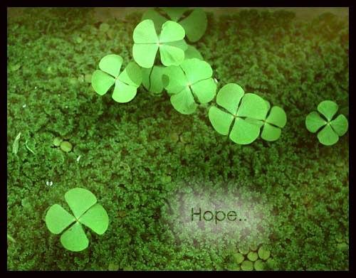 cỏ bốn lá, may mắn, hi vọng