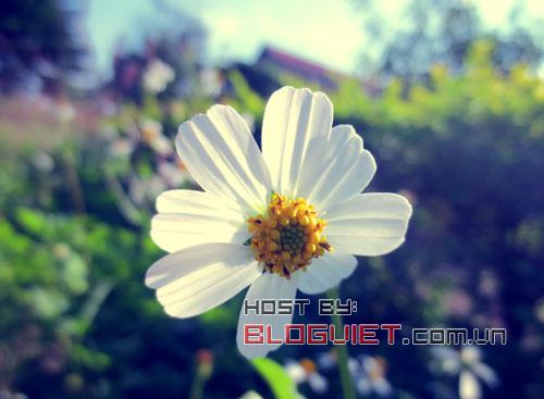 Chờ đợi một mùa hoa (Thì thầm 329)