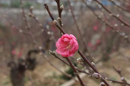 Xuân đang về người có nhớ cố hương? (CXAN 189)