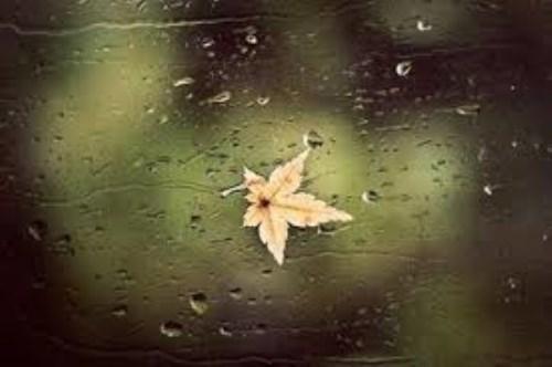 Những chiều mưa