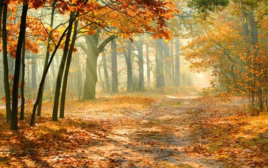 những bài hát hay nhất về mùa thu