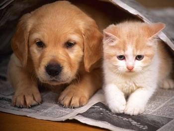 Đi tìm người bạn hiểu được ngôn ngữ chó ( Aha, mình có mặt_Phần 2)