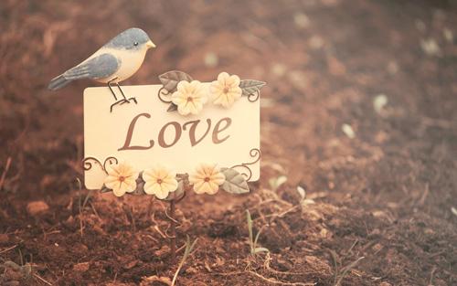 lãng mạn và sỏi đá