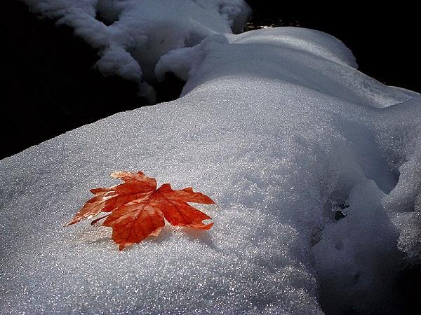 mùa đông xa nhau