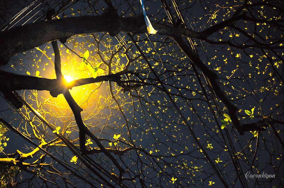Ha Noi đêm đông