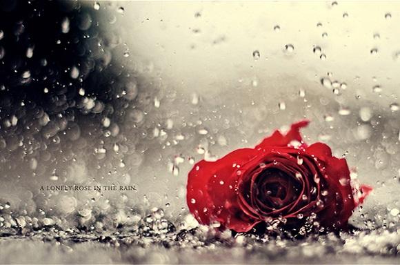 """""""Ước mơ của chúng ta chỉ một cơn mưa đã cuốn trôi tất cả…"""""""