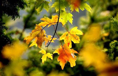 Tháng tám, mùa thu còn non lắm!