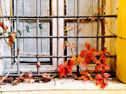 Bên ô cửa mùa thu