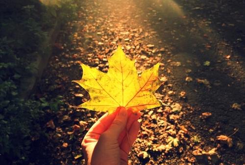 Cảm giác ấy, con người ấy, tháng 8 năm ấy sẽ lại ùa về trong lòng người... Ta muốn cầm tay người, đặt yên trong tay ta một lát. Hãy để sự dịu dàng, thẳm sâu, mát mẻ làm dịu lòng ta lại. Yêu thương của mùa thu là yêu thương trong yên lặng, yêu thương bằng cả tấm lòng, bằng cả con tim. Nó bền chặt, vĩnh cửu và mãi mãi trường tồn với thời gian. Tôi yêu em như yêu mùa thu!