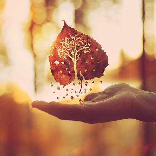 Anh hẹn với mùa thu