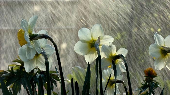 Cậu thấy gì sau những giọt mưa xuân?