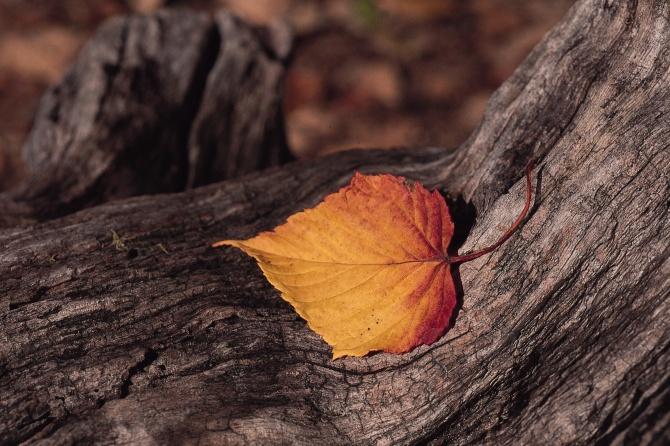 Blog Radio 469: Còn thương thì làm sao trốn được trái tim mình?