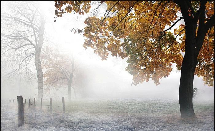 Chút thoáng mùa đông