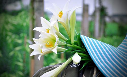 Tháng tư, tôi giấu muộn phiền sau bó hoa loa kèn trắng muốt