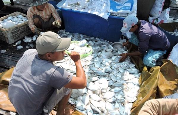 Cá chết hàng loạt, ngư dân kiện 14 doanh nghiệp xả thải