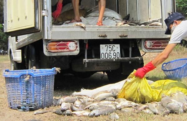 HotNews 6/5: Nhiều tấn cá lồng và cá biển ở Huế tiếp tục chết