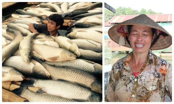 """HotNews 9/5: Cá chết trắng sông, ông Vụ trưởng bảo """"Chuyện nhỏ"""""""