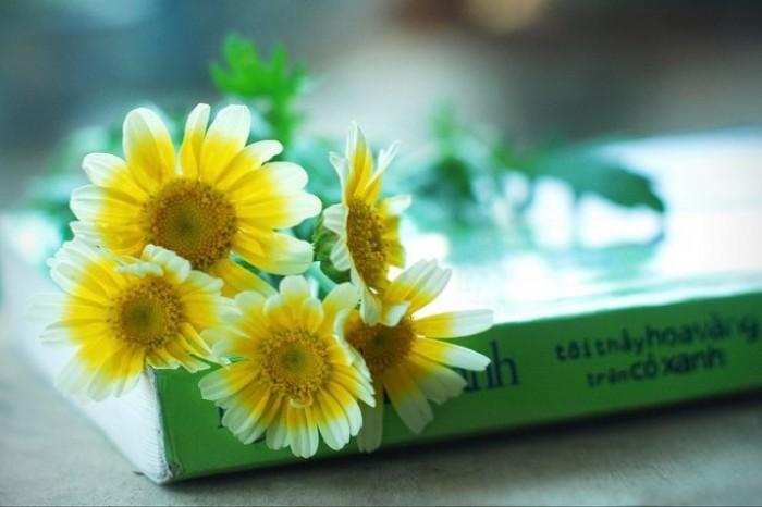Tôi thấy hoa vàng trên cỏ xanh – khúc hoài niệm một thời thơ ấu
