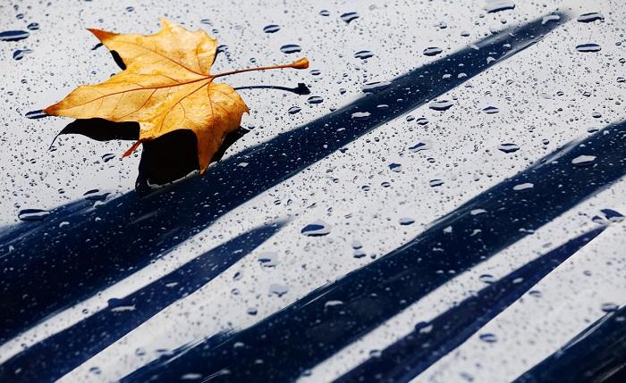 Mối tình đầu rơi theo từng chiếc lá