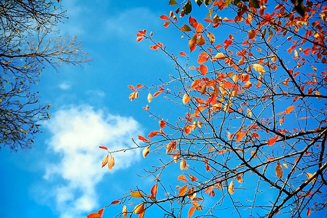 Thu trong xanh cơn gió bỗng ngọt lành