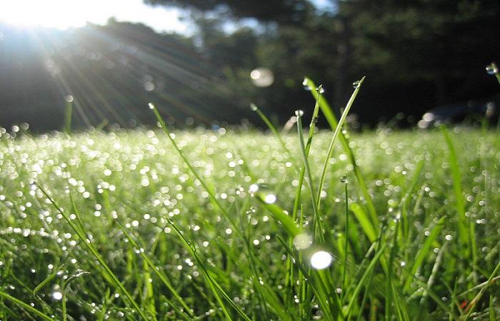 Ước đời mình chỉ là nhánh cỏ vô ưu