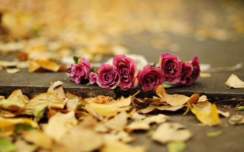 Lạc bước mùa thu