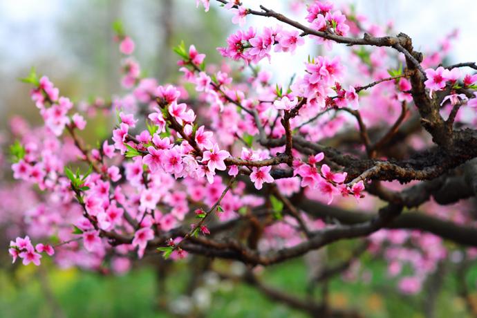 Mùa xuân của bạn có màu gì?