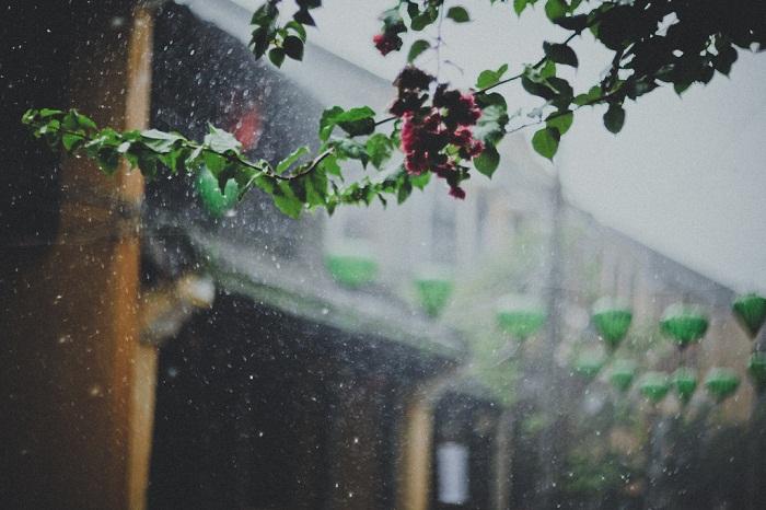 Không có nụ hôn nào cho những ngày mưa