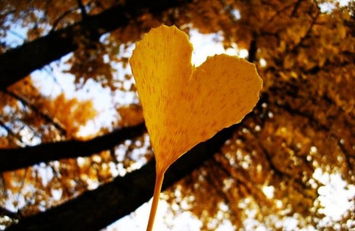 blog radio,  Hoài niệm mùa thu