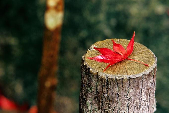 blog radio, Khoảng lặng bình yên của mùa thu