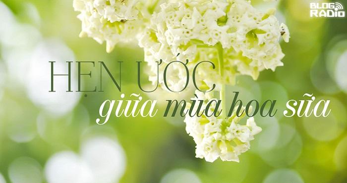 Hẹn ước giữa mùa hoa sữa