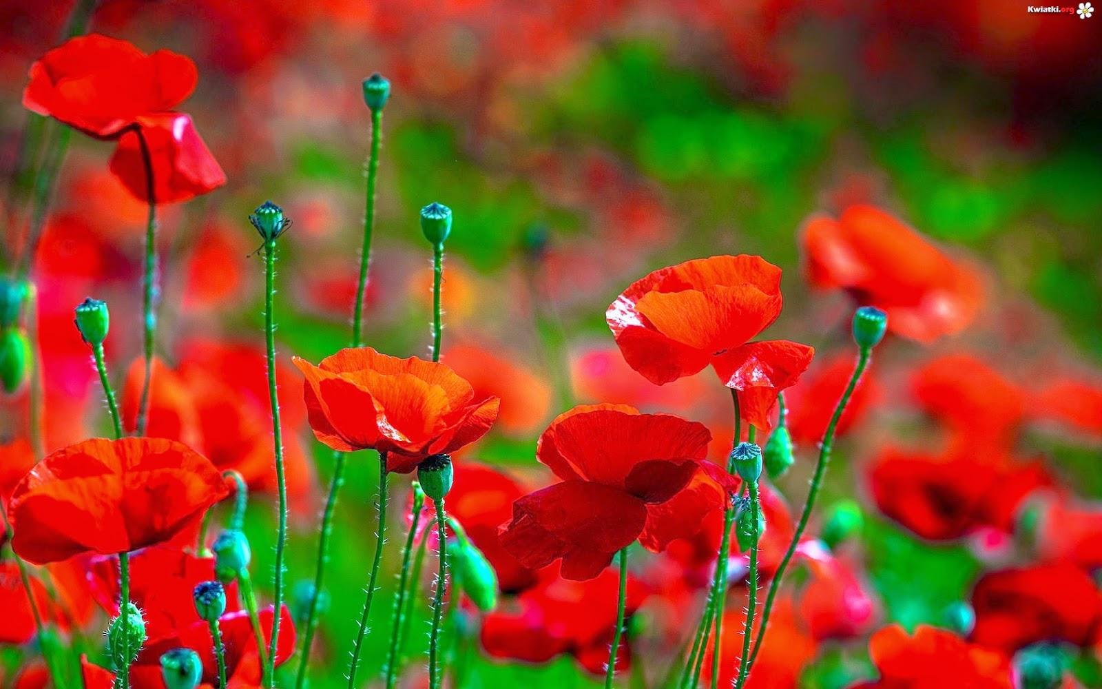 Loài hoa tượng trưng cho 12 cung hoàng đạo  (Vlog Chiêm Tinh)