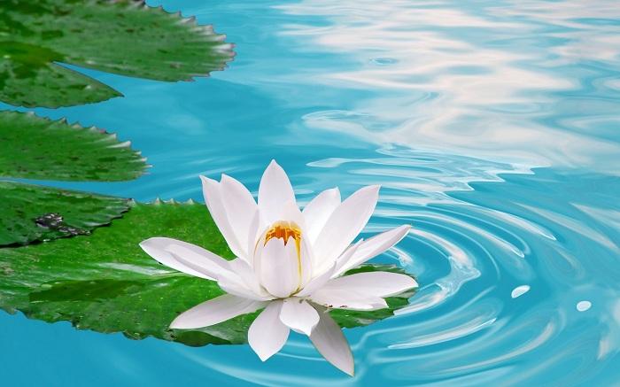 Để có được sự thanh tịnh trong tâm hồn