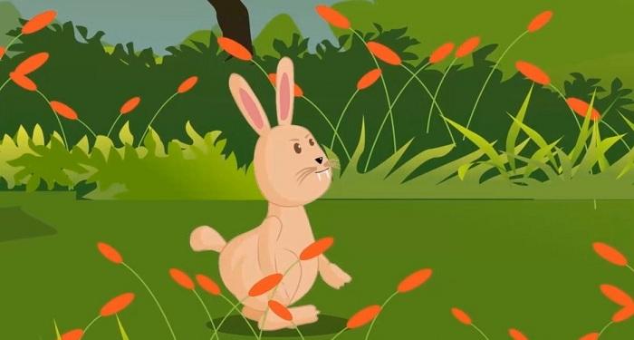 Thỏ thay răng (Bóng mát tâm hồn)