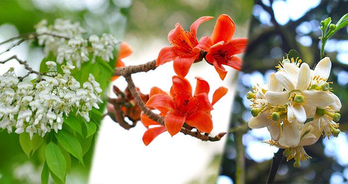 Thơ Radio: Tháng ba về thương nhớ một mùa hoa