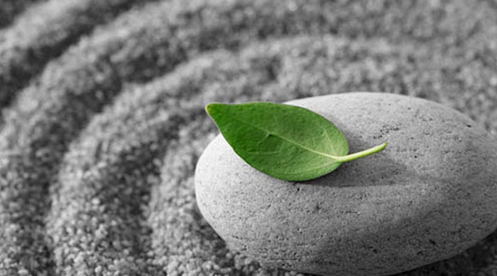 66 câu Phật học cho cuộc sống an nhiên tự tại (Cafe Vlog)