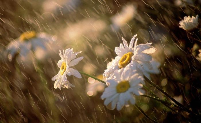 Mưa ướt chiều hò hẹn