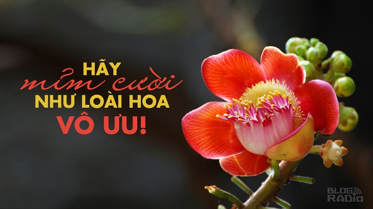 Hãy mỉm cười như loài hoa vô ưu!