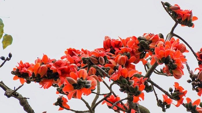 Có loài hoa mang tên tháng ba